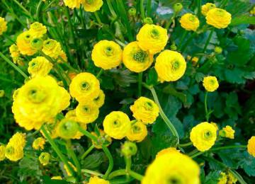 Красивые, но опасные: 10 растений, которые не следует сажать на своем участке