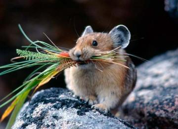 Избавить огород от мышей просто: посадите любое из 14 растений