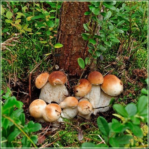 где растут грибы в перми